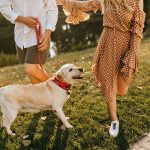 Your New Family Member – Training Your Puppy