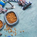Omega 3 Dog Food – Give the Dog a Try