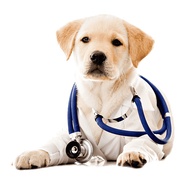 Pet Veterinarian Health